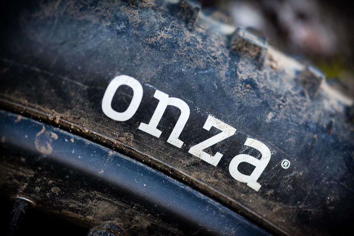 Onza Canis